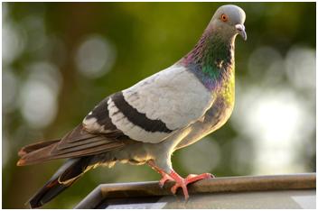 Google's pigeon update 2014