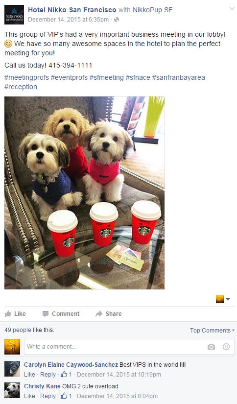 Hotel Pet Friendly Image